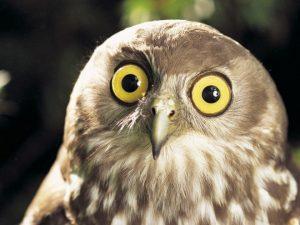 wtf-owl2