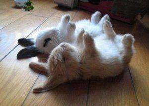 konijnen-pasen-17