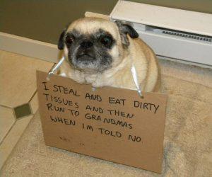 bad-pug2