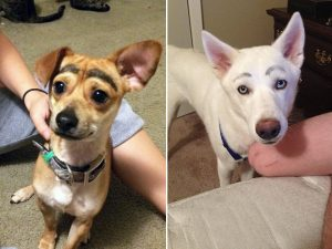 dog-eyebrows11