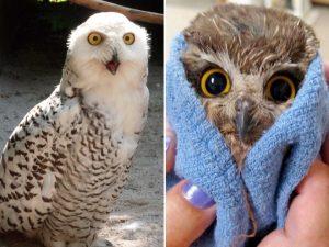 wtf-owl7