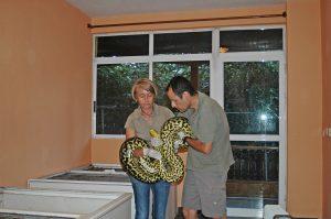 manejando serpientes