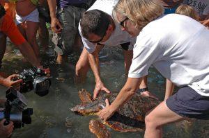 tortugas marinas extra