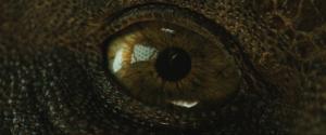 ojo cronicas borondon