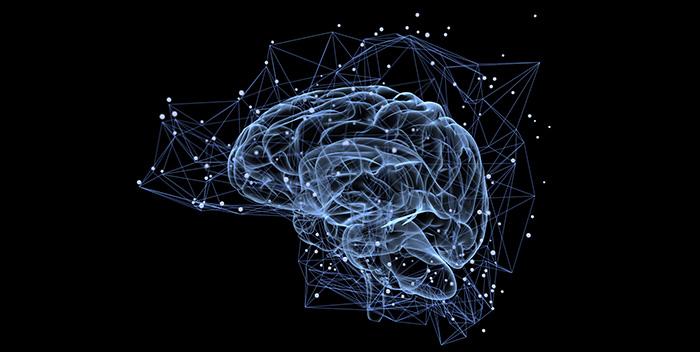Cerebro feliz, cerebro sano, cerebro óptimo; Cuevas, receptáculos del misterio; Las claves de Contact; La sommelier de las hierbas…este viernes en CSB