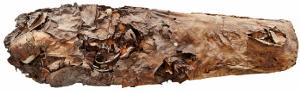 Figura-2-Momia-procedente-del-barranco-de-Guayadeque-Archivo-El-Museo-Canario