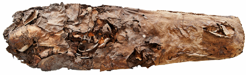 CSB T11-11 ¿Y si nunca hubo momias en Canarias?; la misteriosa isla Bouvet; fermentos y salud; la naturaleza sagrada del Ser Humano. Este viernes 22.